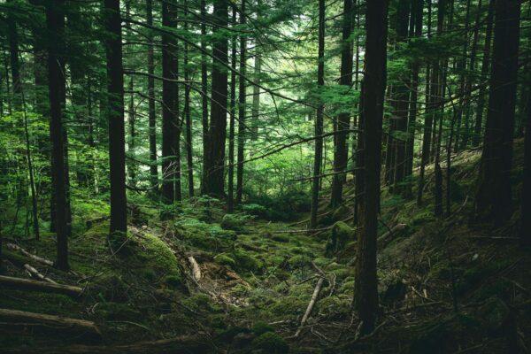 奇迹躲过猛兽 俄1岁多女童误闯森林3天获救
