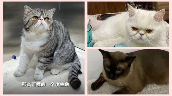 哈尔滨3只宠物猫检测阳性 被强制安乐死