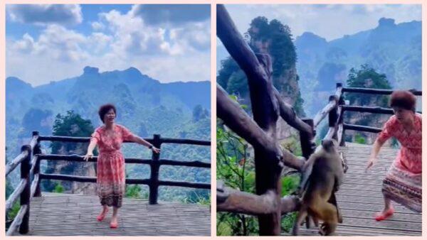 中国大妈在景区唱歌跳舞 猴子趁机抢走包包