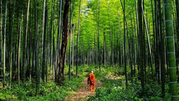 僧侣苦化缘修大寺 转生后开启前世记忆续宏愿