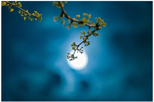 林青:又到中秋月圓時 多少遊子淚濕襟