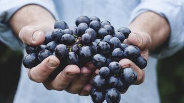 肝不好的人 吃這3種水果有益