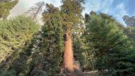加州野火继续肆虐 古老红杉林受到威胁