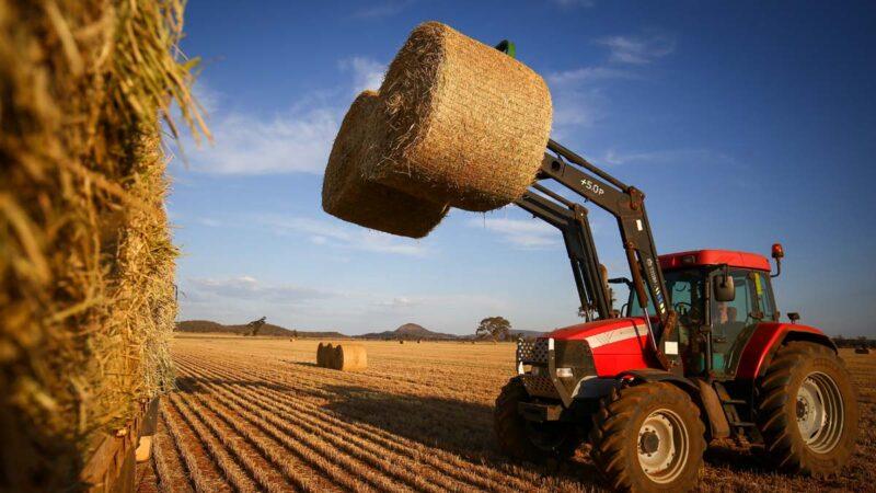 中澳关系紧张下 中共抢购澳洲小麦引关注