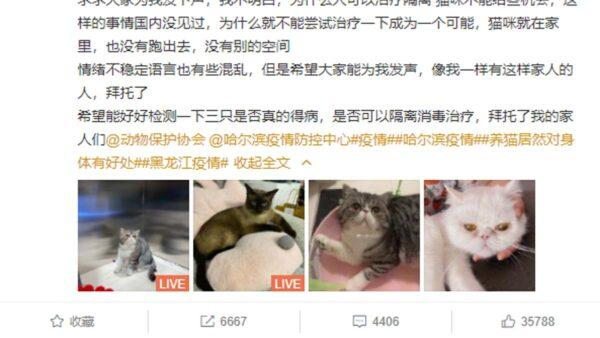 黑龍江3隻確診貓被處安樂死 網友怒批「粗暴野蠻」