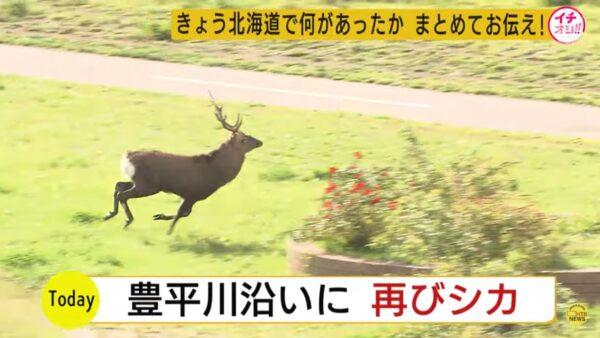 鹿闯轨道区 北海道新干线驱离停摆7小时