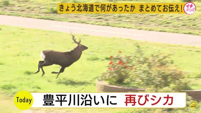 鹿闖軌道區 北海道新幹線驅離停擺7小時