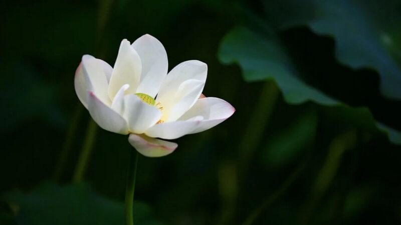 中華傳統美德故事(悌篇)之五:繆彤自撾