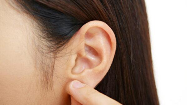 按按耳朵提升免疫力、減肥!1方法效果最好