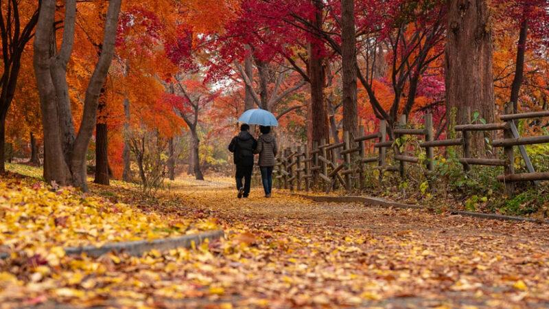 秋季是養肺好時節 避開4個傷肺行為