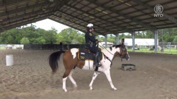 警民互助 休斯顿骑警部获得一匹骏马