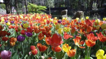探访澳洲珀斯植物园  感受绚丽与宁静