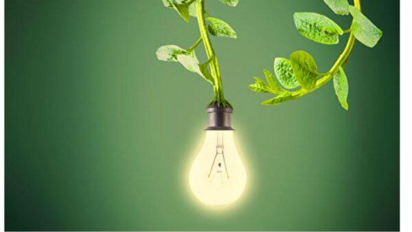 MIT新技術讓植物可以充電並發光