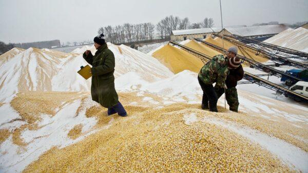 能源危机触发连锁效应 中国恐面临粮价飙涨